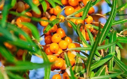 枣树皮 枣树皮的功效 枣树皮的作用