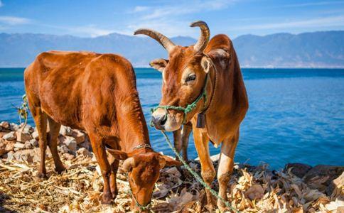牛髓 牛髓的功效 牛髓的作用