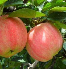 秋冬3种红色水果温热驱寒