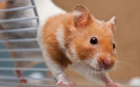 老鼠药中毒怎么办 不同老鼠药中毒的急救方法有哪些 误服老鼠药中毒该如何急救