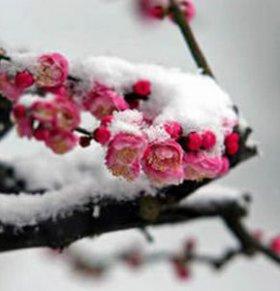 大雪节气 大雪节气养生 如何预防感冒