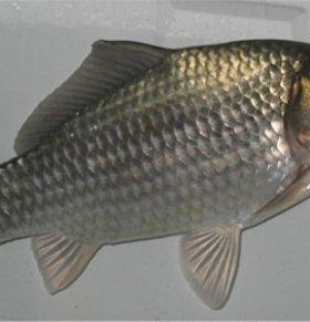 各类鱼的不同养生功效