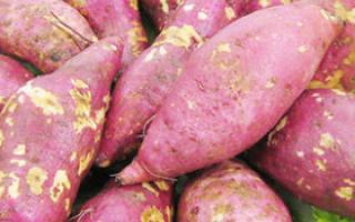 冬天食用红薯的七个好处_生活指导_保健_99健康网