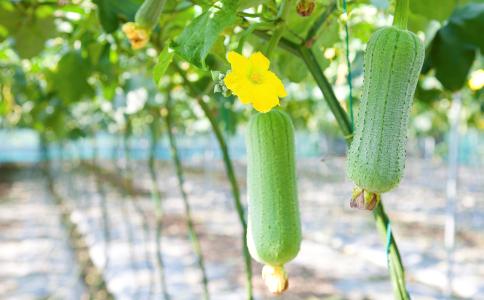 吃黄瓜有什么好处 黄瓜的功效 吃黄瓜的好处