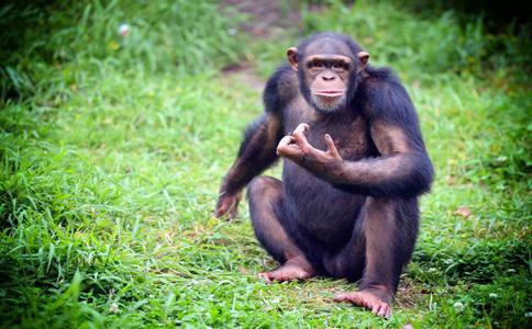 雄猴抱伤心雌猴 雄猴安慰伤心雌猴 雄猴安慰雌猴