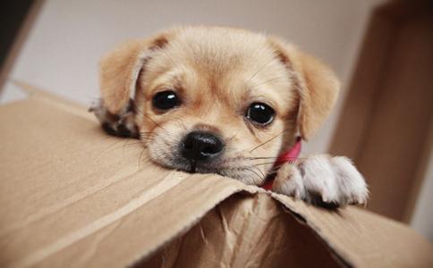 纽约一条狗继承百万家产 纽约一条狗继承主人百万家产 一条狗继承主人百万家产