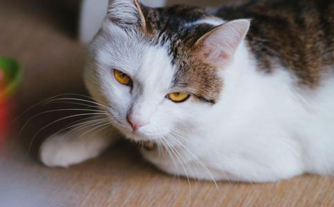 小猫车祸身亡后起死回生 小猫车祸身亡被埋 小猫死亡5天后起死回生