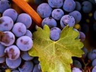 适合高血压患者的几种水果
