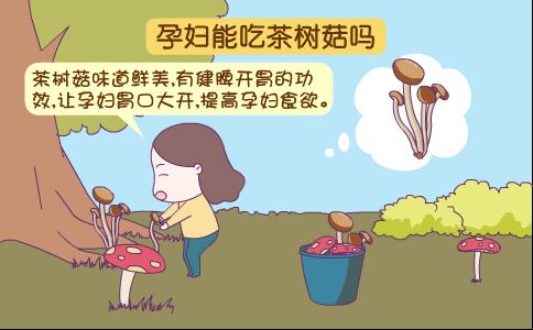 孕妇吃茶树菇 孕妇吃茶树菇有什么好处 孕妇吃茶树菇的禁忌