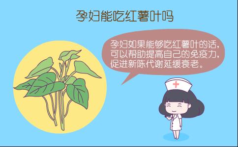 孕妇吃红薯叶 孕妇能吃红薯叶吗 孕妇吃红薯叶的好处