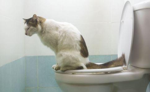 搞笑图片 搞笑的宠物图片 搞笑的动物图片