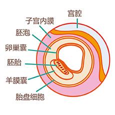 怀孕2周 怀孕2周胎儿发育 怀孕2周胎儿发育指标