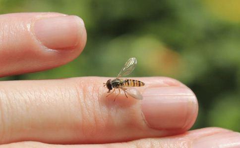 蚊虫叮咬怎么止痒 蚊虫叮咬的止痒方法 蚊虫叮咬皮炎怎么办