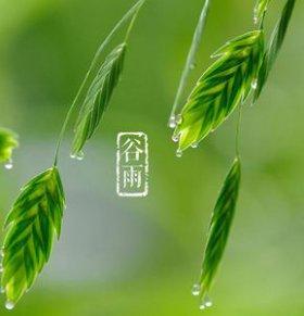 24节气谷雨 谷雨的风俗 谷雨的由来