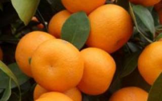 八月份必吃的四款时令水果_夏季保健_保健_99健康网