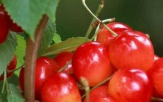 夏季消暑清火 清热解毒的三种瓜果推荐_夏季饮食_饮食_99健康网