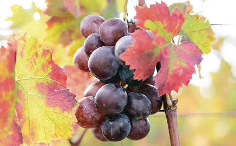 夏季吃什么水果能减肥 夏季减肥的水果 夏季水果减肥法