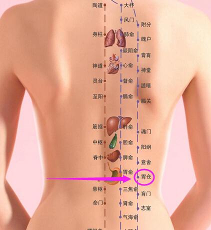 剑突和胃位置图片_胃位置图