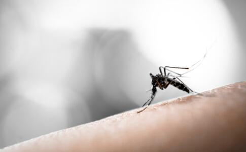 最大蚊子工厂 怎么预防登革热 登革热如何预防