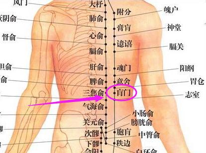 腰部骨结构位置图片
