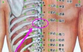 阳辅穴位的准确位置图_穴位图_中医_99健康网