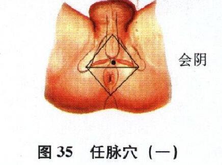 会阴穴 会阴穴位的准确位置图 会阴穴穴位图