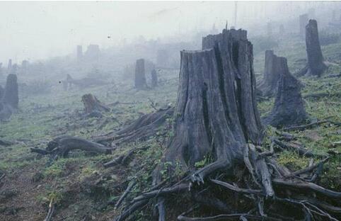 没有树木的危害