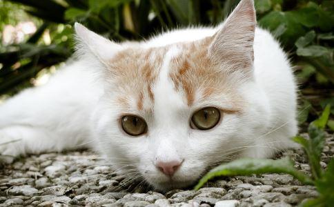 养猫好么 如何养猫 养猫有什么误区