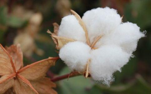 孕妇梦见捡棉花是什么意思