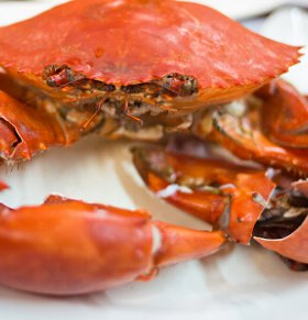 连续四天吃螃蟹进医院 哪些人不能吃螃蟹