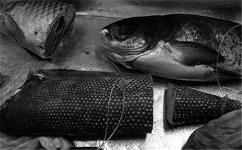 油鱼冒充大马哈鱼 大马哈鱼有哪些营养价值
