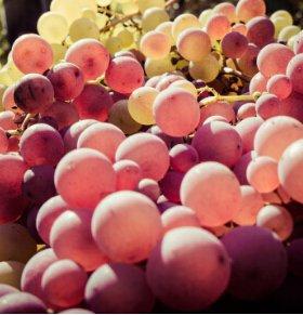 草莓具有抗毒作用 防癌抗癌多吃六种水果