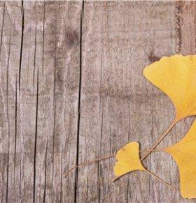 银杏叶枕头有哪些好处 如何做银杏叶枕头