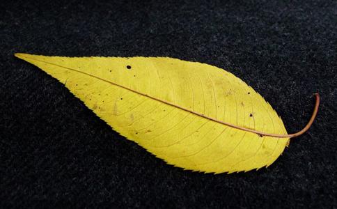 滴虫性阴道炎的治疗 桃树叶能治疗阴道炎吗 如何治疗阴道炎