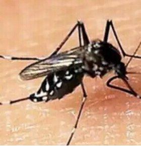 寨卡病毒肆虐巴西 总统呼吁发动灭蚊大战