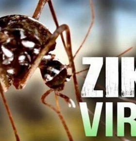 世卫成立紧急小组对付寨卡病毒蔓延