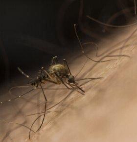 巴西每天500人感染寨卡 教你如何来防蚊