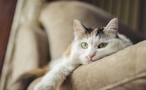 养宠物好么 养宠物要注意什么 养宠物有什么禁忌
