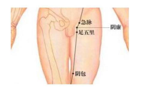 肝经位置图图解