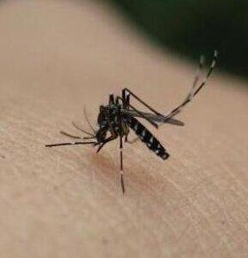 寨卡病毒传播风险高不高关键在于蚊虫的活跃性