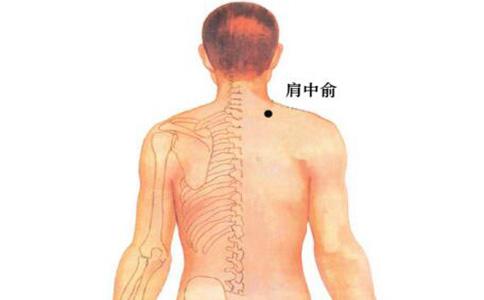 肩中俞穴位的准确位置图