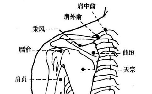 按摩臑俞穴位的作用 按摩臑俞穴的好处 按摩臑俞穴有什么作用