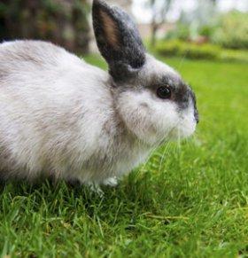 预防胎儿畸形 孕妈切勿吃兔肉