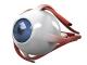 中医治疗视神经萎缩的方法