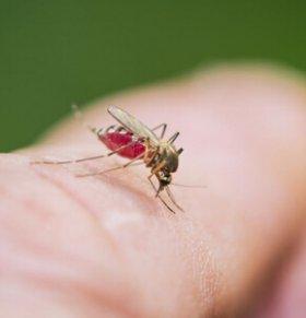 新加坡防寨卡入侵 开启灭蚊大作战