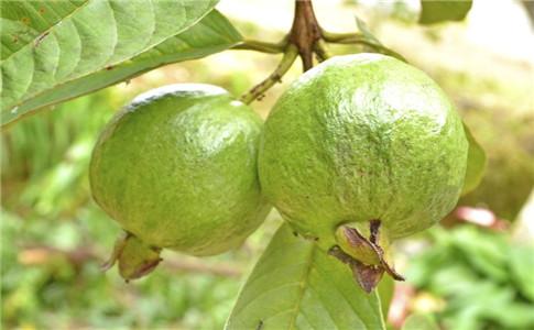 腹泻吃什么水果好 腹泻吃什么水果 腹泻吃什么水果比较好