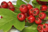 减肥粥:赤小豆山楂粥的做法