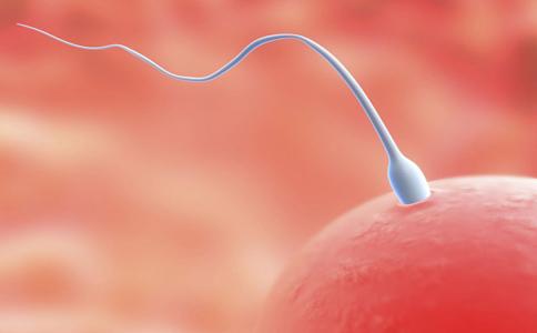 如何提高精子质量 吃什么提高精子质量 提高精子质量的食物有哪些