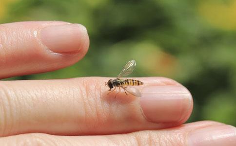 夏季如何预防蚊虫叮咬 夏季预防蚊虫叮咬的方法 预防蚊虫叮咬