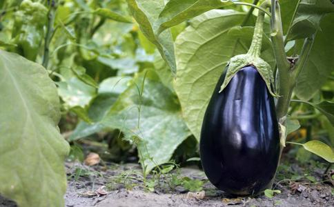 降压蔬菜有哪些 高血压患者吃什么降压 降血压最好的方法有哪些